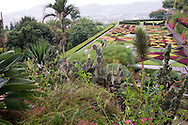 Tropical plants and a terrace planted in a checkerboard pattern in the Jardim<br /> Botanico, Madeira, Portugal