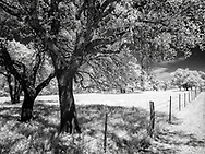 Infrared image of Texas country roads - Oak trees