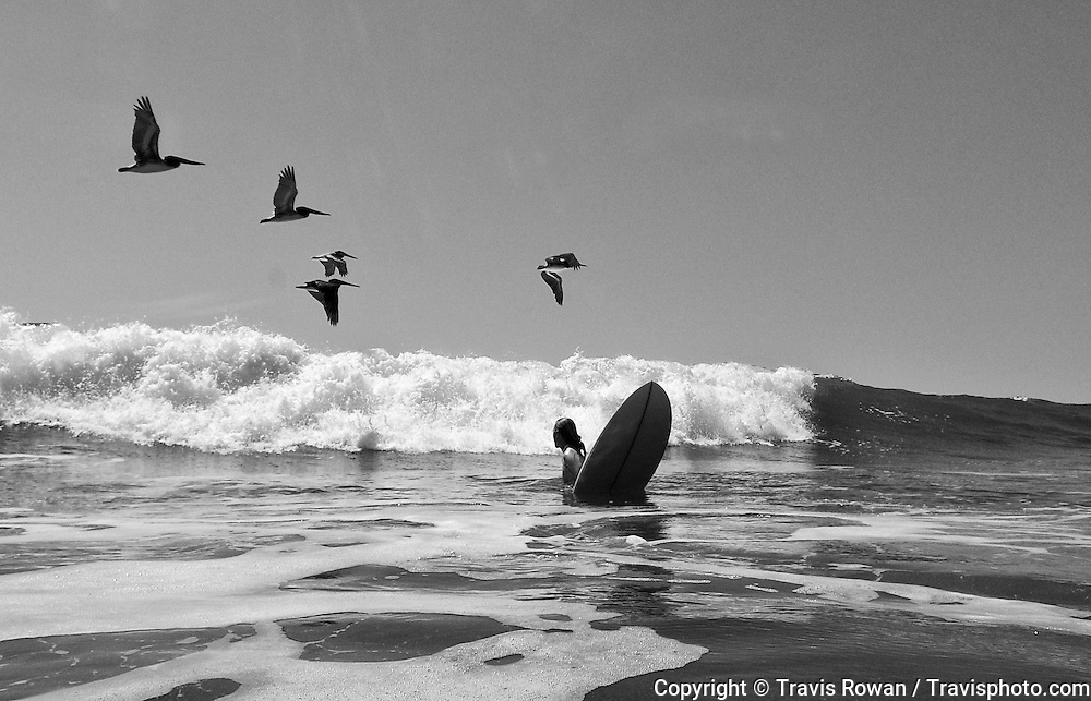 A blond female surfer pauses to admire a flock of brown pelicans gliding over the waves. Costa Rica