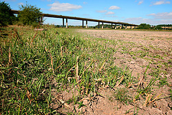 UK ENGLAND HERTFORDSHIRE WELWYN GARDEN CITY 9AUG06 - Dried-up Kingsmeads Wetlands floodplain, the largest remaining grazed riverside flood meadow in Hertfordshire. The combination of ditches, floodwater and regular grazing has created a rich wetland habitat that is excellent for a range of flora and fauna. ..jre/Photo by Jiri Rezac..© Jiri Rezac 2006..Contact: +44 (0) 7050 110 417.Mobile:  +44 (0) 7801 337 683.Office:  +44 (0) 20 8968 9635..Email:   jiri@jirirezac.com.Web:    www.jirirezac.com..© All images Jiri Rezac 2006 - All rights reserved.