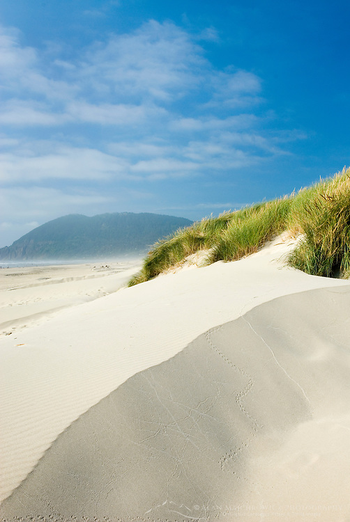 Dunes and dune grass at Nehalem State Park Oregon USA