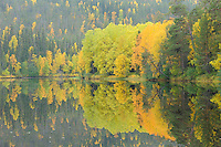 Autumn colour landscape, Oulanka River, Finland.
