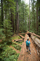 Young woman hiking in Humbolt Redwoods State Park, CA