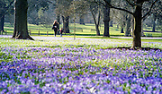 © Licensed to London News Pictures. 11/03/2015. Kew, UK. A young woman and boy walk through the displays. People enjoy the cross displays at Kew Garden's today 11th March 2015. The display features the variety Crocus tommasinianus. The Uk has enjoyed warm sunny weather this week.  Photo credit : Stephen Simpson/LNP