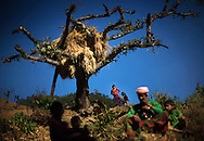 Family members of Jeera sit under a dead tree in Kalekanda village, Achham, Nepal, on the site where two of her baby girls were killed in separate overnight attacks by a jackal and a snake as they observed chaupadi six and eight years ago respectively.