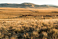 Big Hole Valley, cattle, SW Montana