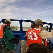 Idaho, Canyon County, Snake River, Deer Flat National Wildlife Refuge, goose nest survey