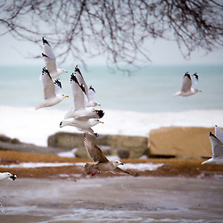 Gulls at Bradford Beach in January