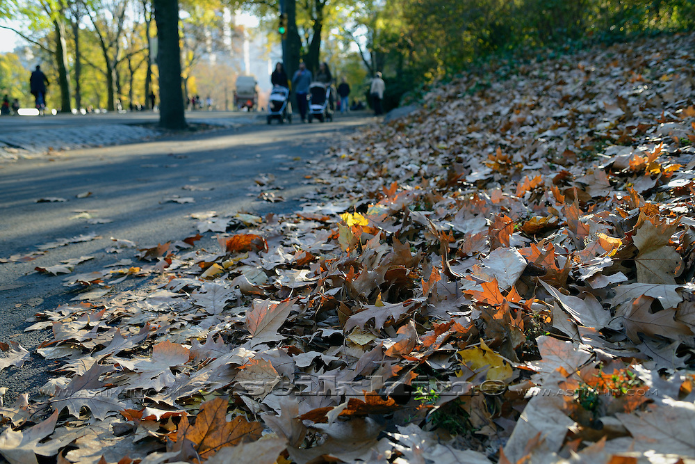 Fall in Central Park.