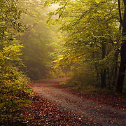 Road covered with foliage across an autumn forest