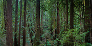 Muir Woods, California<br />