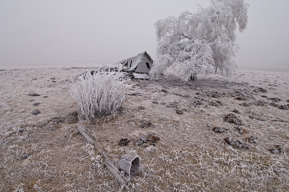 A lone tree standing sturdy in an icy fog may well have been planted by the same early settlers who built this abandoned home.  Dawes County, Nebraska.