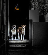 Two dogs acting as bouncers at the bar entrance