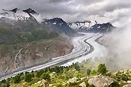 Aletschwald und Grosser Aletschgletscher mit den Walliser Fiescherh&ouml;rnern im Hintergrund an einem nebligen und bew&ouml;lkten Tag im Juli, Riederalp, Wallis, Schweiz<br /> <br /> The Aletschwald and the Grosser Aletschgletscher with the Walliser Fiescherh&ouml;rner in the background on a cloudy and fogy day in July, Riederalp, Valais, Switzerland