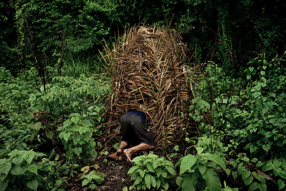 Salvador, 27, an Ashaninka villager of Tsiquireni village, enters a hiding place to hunt birds using his bow and arrows, in the forests near Tsiquireni, Ene River, Peru. April 2012. Fishing, hunting, farming and gathering are the only ways of providing food to the village. Photo/Tomas Munita