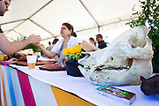 A pig skull sits near the serving area for Heritage Tavern during Yum Yum Fest in Central Park on Sunday. The restaurant served a fried suckling pig in coconut red curry with market vegetables, sticky rice & fresh herbs.