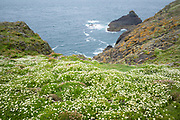 View of the Atlantic Ocean from clifftop on Skomer Island, National Nature Reserve, South Wales