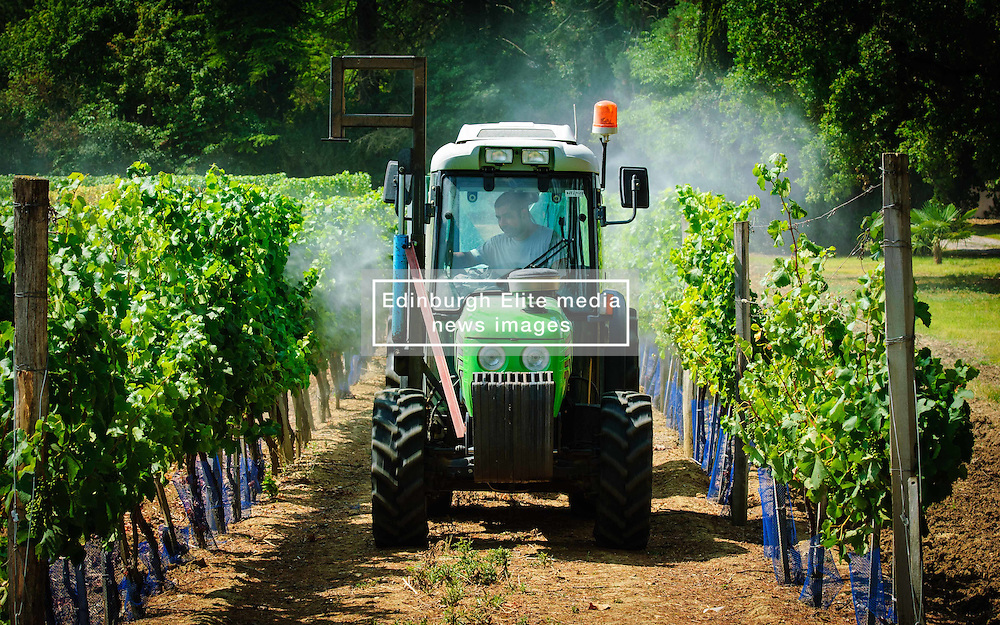 Farmer spraying the vineyard with water in the Dordogne, France in summer<br /> <br /> (c) Andrew Wilson | Edinburgh Elite media