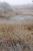 Doncaster - Tuesday, Feb 19 2008: Landscape view of frosty reedbeds surrounding a frozen lake at Potteric Carr Nature Reserve. The railway line is visible in the background. (Photo by Peter Horrell / http://www.peterhorrell.com)