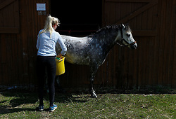 © Licensed to London News Pictures.16/07/15<br /> Harrogate, UK. <br /> <br /> A girl washes her horse down after competing on the final day of the Great Yorkshire Show.  <br /> <br /> England's premier agricultural show has seen three days of showcasing the best in British farming and celebrating the countryside.<br /> <br /> The event which attracts over 130,000 visitors each year displays the cream of the country's livestock and offers numerous displays and events giving the chance for visitors to see many different countryside activities.<br /> <br /> Photo credit : Ian Forsyth/LNP