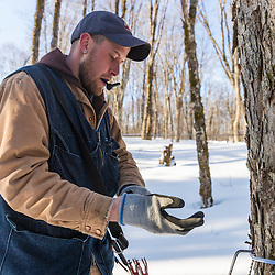 Jean Francois Faucher repairs a tap on the LaRiviere sugarbush in Big Six Township, Maine. This property has more than 300,000 maple syrup taps and produces 3 - 4 percent of the US maple syrup crop.