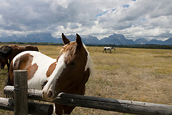 Horses graze in Grand Teton National Park