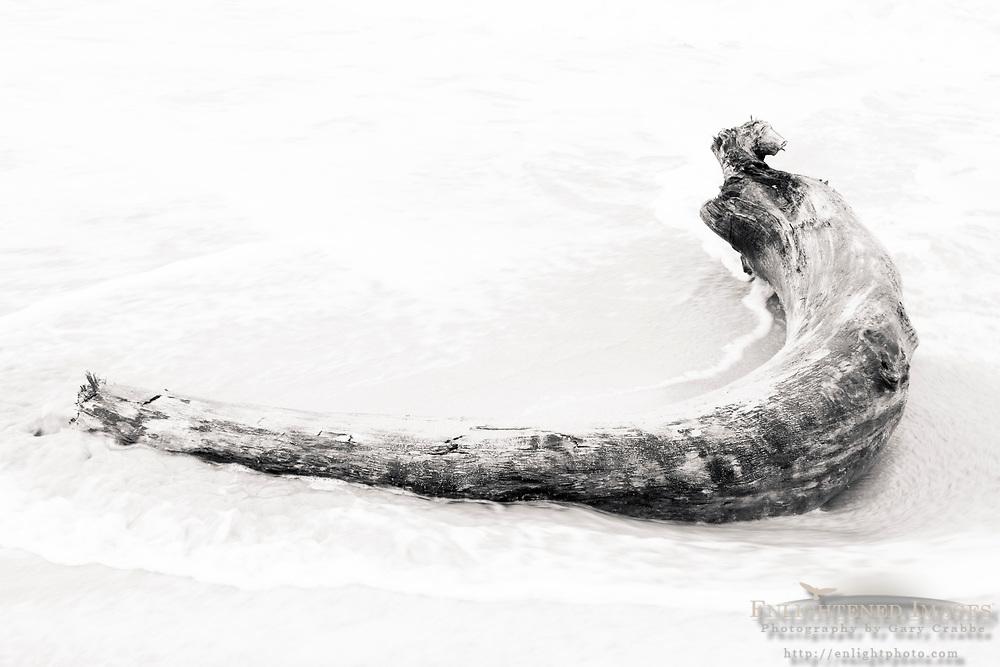 High key driftwood on beach at Lydegate Park, near Wialua, Kauai, Hawaii