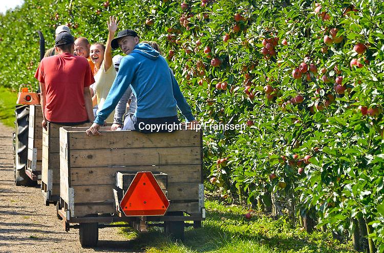 Nederland, Boven Leeuwen, 2-9-2017Poolse arbeiders, plukkers, halen de appels en peren van de bomen in een boomgaard. Ze gaan hun pauze houden.Foto: Flip Franssen