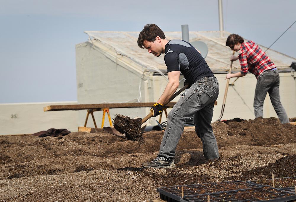 Digging for hoophouse Brooklyn Grange