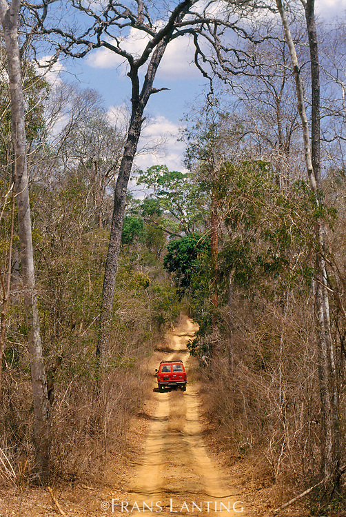 Vehicle on dirt road in dry forest near Morondava, Western Madagascar