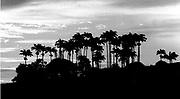 Barbados Landscape