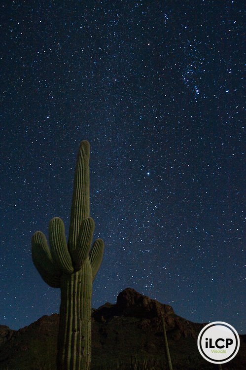 Saguaro cactus (Carnegiea gigantea) and starry night sky.