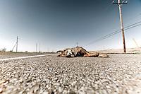 Roadkill on side of road outside Venice, LA.  Copyright 2011 Reid McNally