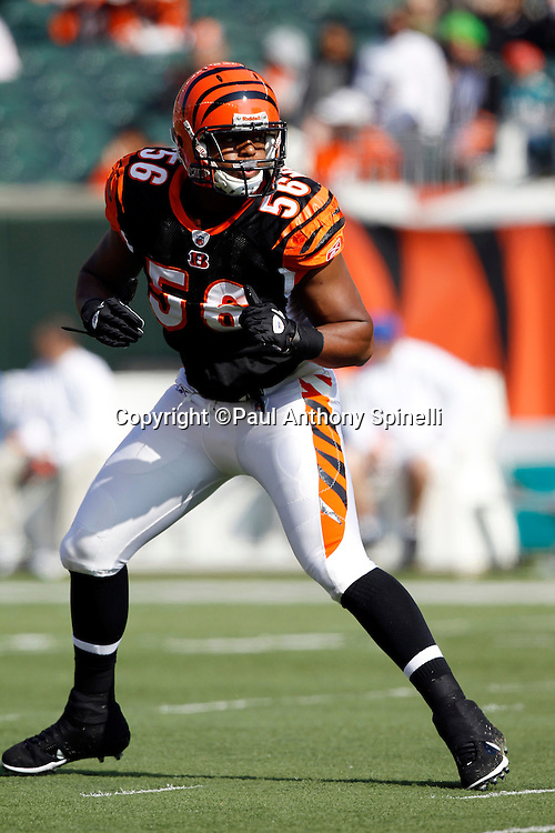 Cincinnati Bengals linebacker Roddrick Muckelroy (56) makes a move during the NFL week 8 football game against the Miami Dolphins on Sunday, October 31, 2010 in Cincinnati, Ohio. The Dolphins won the game 22-14. (©Paul Anthony Spinelli)