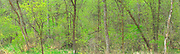 Forest panorama along the Seine River in spring<br />Winnipeg<br />Manitoba<br />Canada