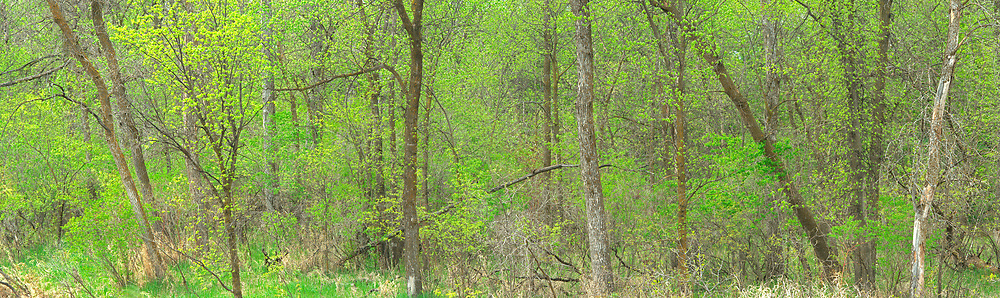 Forest panorama along the Seine River in spring<br />