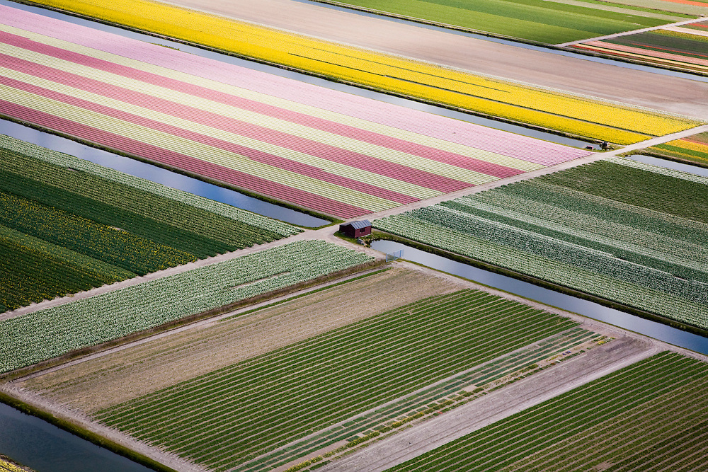 Nederland, Zuid-Holland, Hillegom, 16-04-2008; bollenstreek, percelen met bollen, gedeeltelijk in  bloei (narcissen en hyacinten); zandgrond.narcis, bol, hyacint*,..luchtfoto (toeslag); aerial photo (additional fee required); .foto Siebe Swart / photo Siebe Swart