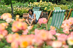 © Licensed to London News Pictures. 14/06/2017. London, UK. A woman sits on a deckchair amongst the floral displays in Regent's Park in fine weather.  Temperatures are forecast to be even warmer in the capital in the next few days.   Photo credit : Stephen Chung/LNP
