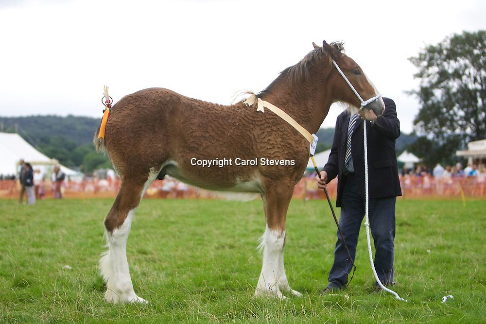 Richard &amp; Robert Bedford's Brood Mare Worsborough Chloe<br /> Foal - Hartcliff Horatio