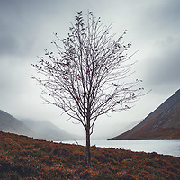 A lone rowan at Loch Turret