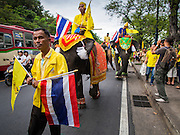 05 DECEMBER 2014 - BANGKOK, THAILAND:  Elephants from the Royal herd make their way through Bangkok traffic to Sanam Luang for observances of the King's Birthday. Thais marked the 87th birthday of Bhumibol Adulyadej, the King of Thailand, Friday. The King was born on December 5, 1927, in Cambridge, Massachusetts. The family was in the United States because his father, Prince Mahidol, was studying Public Health at Harvard University. He has reigned since 1946 and is the world's currently reigning longest serving monarch and the longest serving monarch in Thai history. Bhumibol, who is in poor health, is revered by the Thai people. His birthday is a national holiday and is also celebrated as Father's Day. He is currently hospitalized in Siriraj Hospital, recovering from a series of health setbacks.    PHOTO BY JACK KURTZ