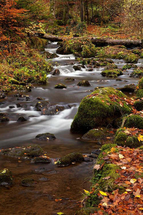 Cascade Chiloza in late autumn wood scenery, Besse en Chandesse, Auvergne, France
