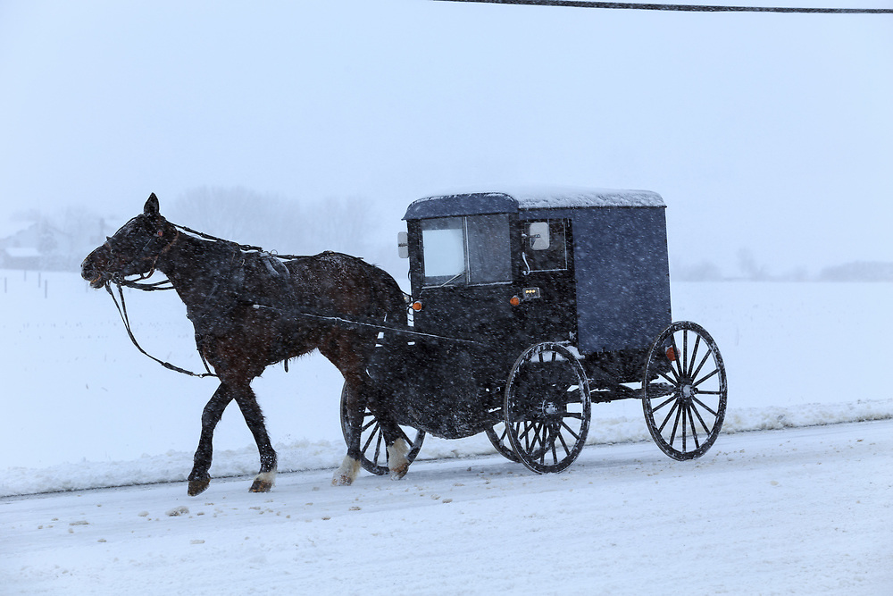 An Amish horse and buggy travel on a snow covered road during a snow storm.