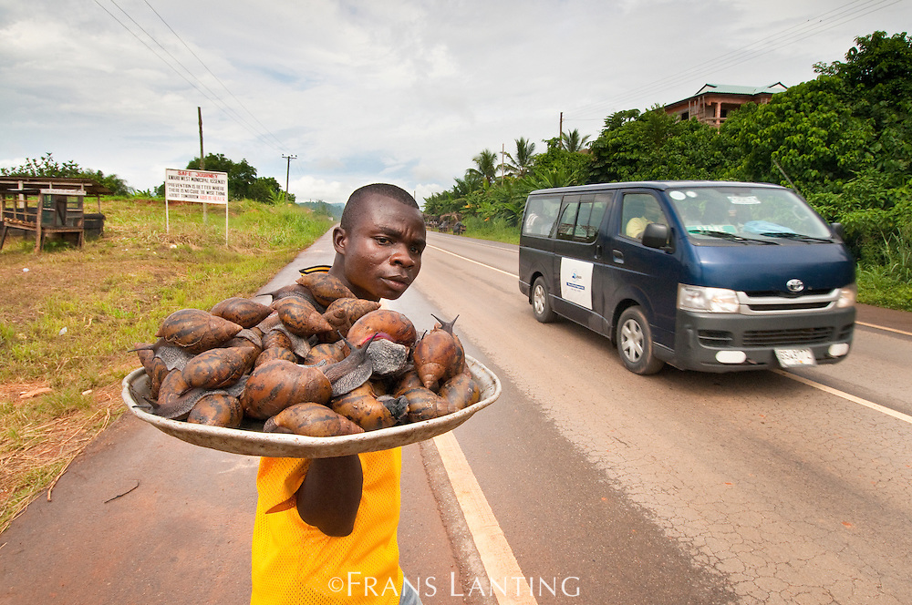 Man selling giant forest snails along main road to ??, Ghana