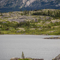 """Lone pine"" promontory, Tutshi Lake"