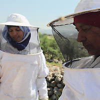 The Bees of Bil'in - Rich Wiles