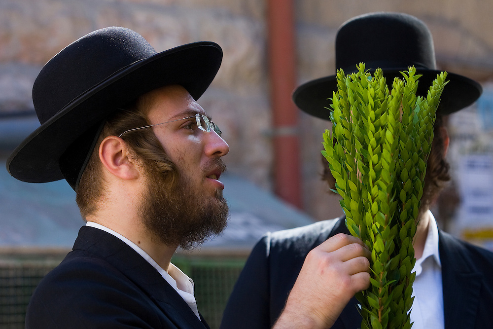 "Ultra orthodox Jewish men check myrtle branches for blemishes to determine if they are ritually acceptable before buying them as one of the four items used as a symbol on the Jewish holiday of Sukkot, in the Mea Shearim ultra-orthodox neighborhood of Jerusalem, Tuesday, Sept 29, 2009. According to the Bible, during the Sukkot holiday, known as the Feast of the Tabernacles, Jews are commanded to bind together a palm frond, or ""lulav,"" with two other branches, along with an ""etrog,"" they make up the ""four species"" used in holiday rituals. The week long holiday begins Friday. Photo by Olivier Fitoussi /ABACAUSA.COM"