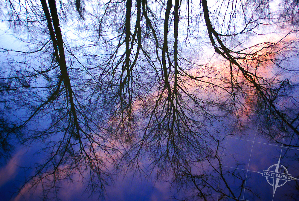 Bare trees reflected in water