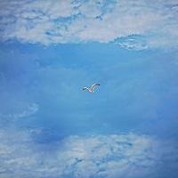 Earth Bird.