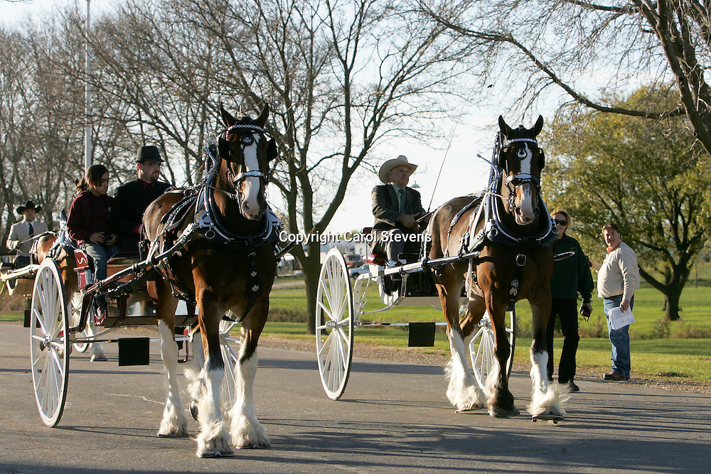 World Clydesdale Show 2011  Before and after the Cart Classes